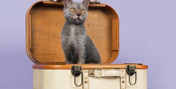 ライコイってどんな猫?特徴や性格について