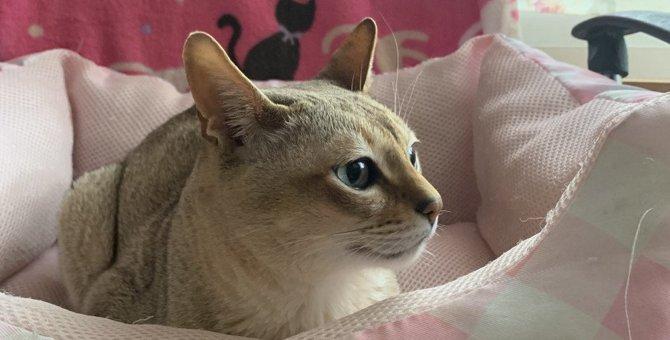 猫が『猫ベッド』で寝てくれない原因3つと対処法