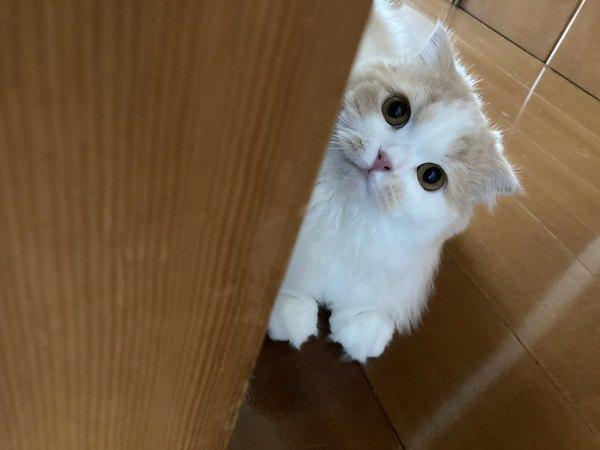 猫ってどんな生き物?基本の知識5つ