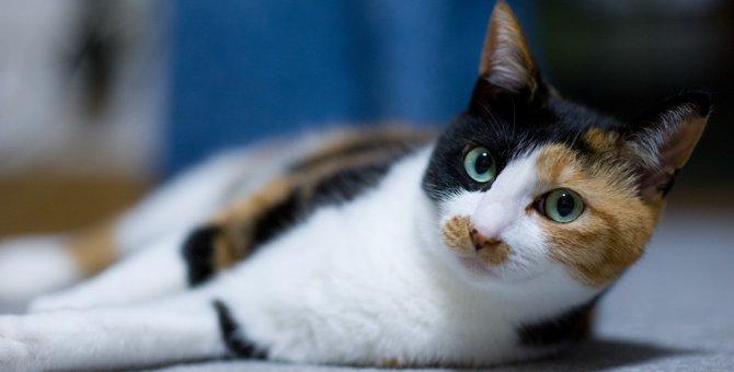 三毛猫のオスの確率が低い理由とそのエピソード