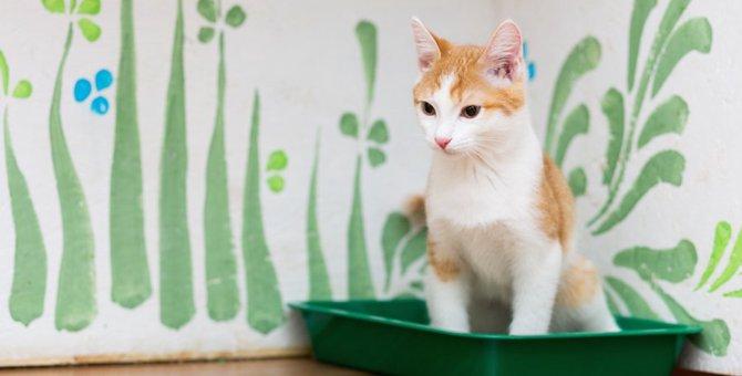 猫用トイレのトレーおすすめ人気ランキング10選、選び方など