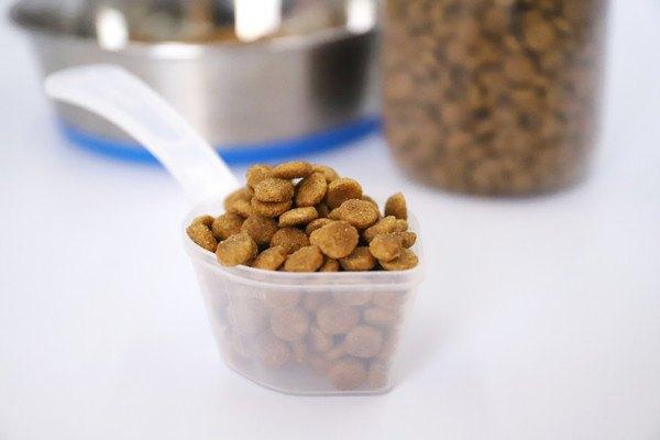 猫のグレインフリーフード!穀物を使わないメリットやおすすめ商品