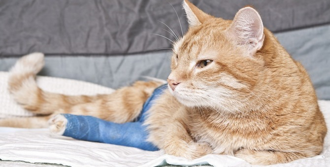猫にホットカーペットは危ない?!利便性に潜む意外な危険性とは?