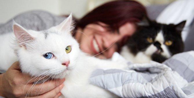猫が『大迷惑!』と感じている飼い主の気まぐれ行動4つ
