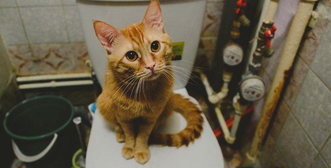 アパートで猫を飼う時の5つの注意点と飼い方