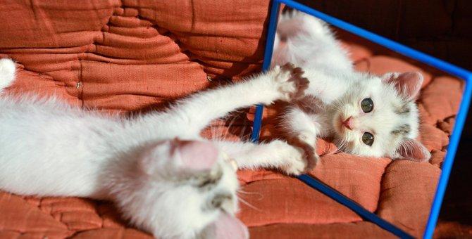 猫が『鏡に映った自分』を見た時の反応3選!