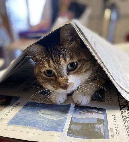 猫が喜ぶ『0円おもちゃ』7選!家庭にあるもので代用できる!