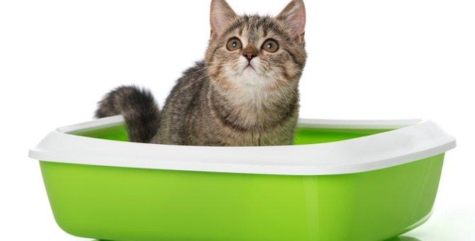 猫のトイレが臭い!ニオイを消すオススメグッズ3選♪