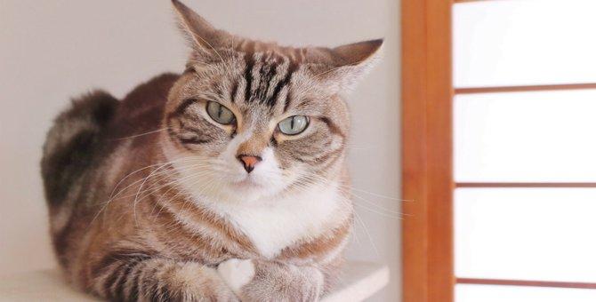 猫が『困惑』してしまう3つのこと