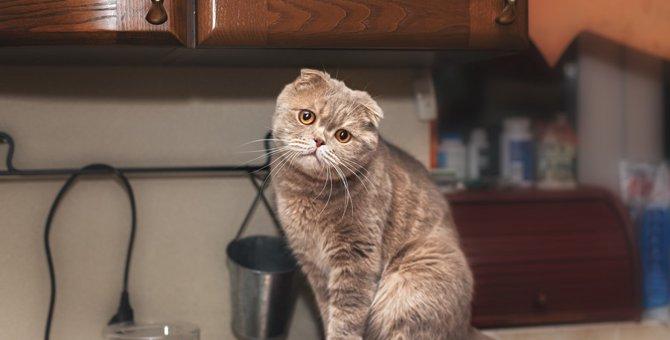 猫は炊飯器が大好き!その理由と対策
