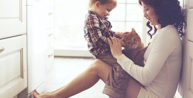 猫の癒し効果3選!何故猫といると癒されるのか、科学的に解明された事