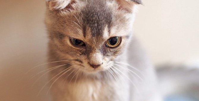 猫が睨むのは怒っている?気持ちや心理