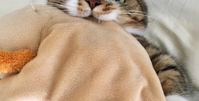 猫が拒否している時の6つの仕草