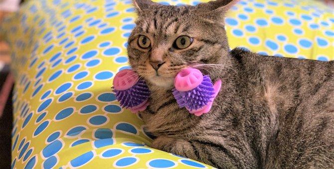 LAYLAの12猫占い【6/22〜6/28】のあなたと猫ちゃんの運勢