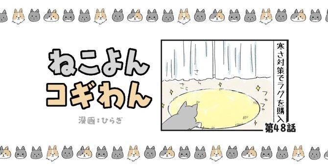 ねこよんコギわん【第48話】「らんのフェイント」