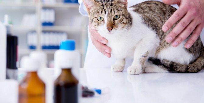 猫のFIPは完治するのか 原因と症状