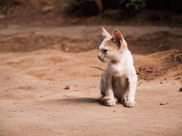 人に興味ないふりをする猫の心理5つ