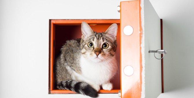 飼い主を閉めだす!脱獄する!ドアや鍵を使いこなす猫のおもしろ動画8連発