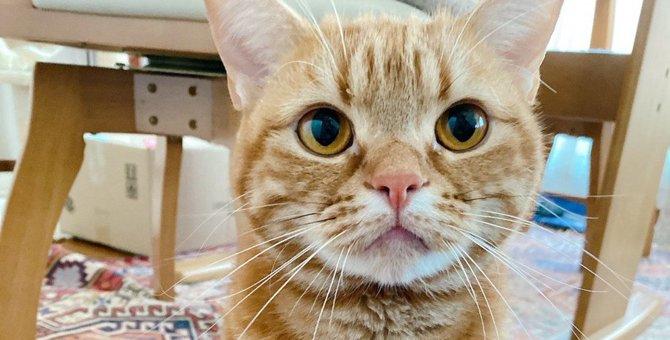 猫が飼い主を『お見送りするとき』の気持ち3つ
