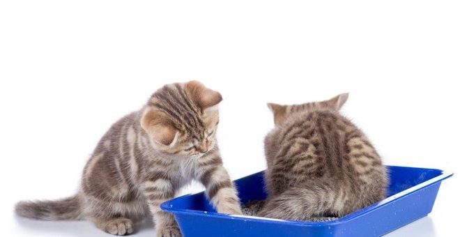猫がご飯に『エアー砂かけ』をする理由3つ