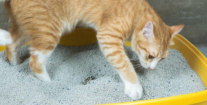 猫がトイレの砂を何度もホリホリする6つの理由