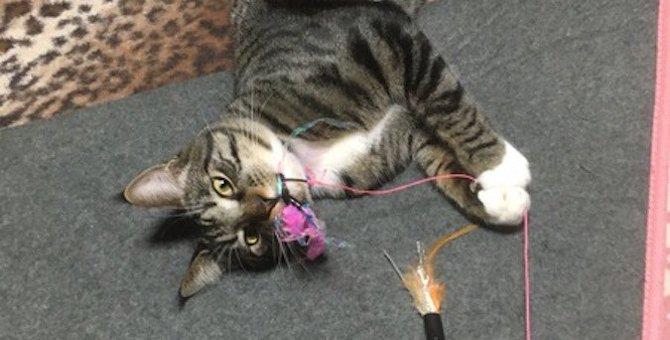 猫を大満足させる『遊び方』4選!短い時間で集中させるおすすめの方法とは?