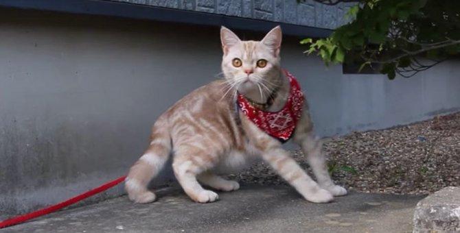 お庭探索をする猫ちゃん♪お散歩中のわんちゃんを見つけてびっくり!