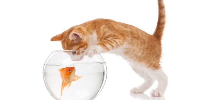 猫のしっぽの秘密をご存知ですか?役割を知ってさらに理解を深めよう