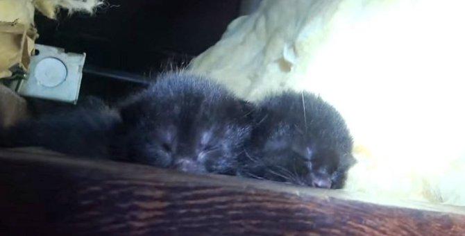 屋根裏で子育て…母猫の監視の元、5匹の子猫の保護完了