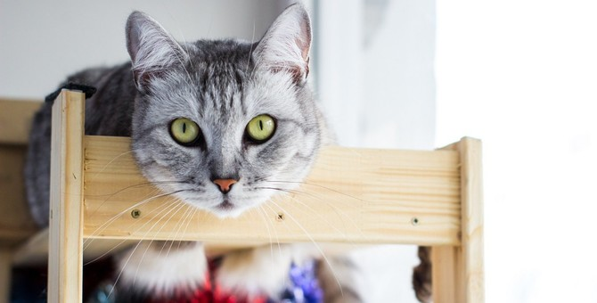 猫が「良かれと思って」してくれるちょっと困ること4つ