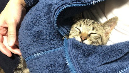保護猫を引き取るときの手順と注意点