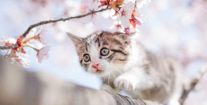 あたたかくなってきた春!猫に気をつけたい4つの体調管理