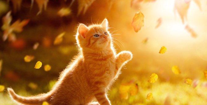 猫が秋になると変わる3つの事