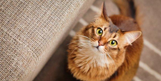 猫のティッキングとは?毛の色の秘密