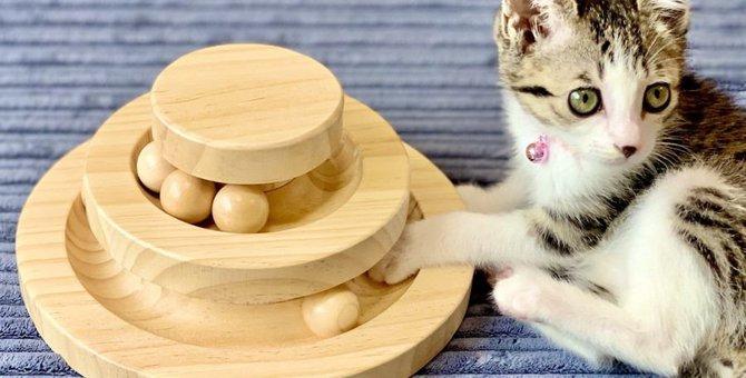 この5つだけはしっかり守りたい!猫の『お留守番』時の注意点