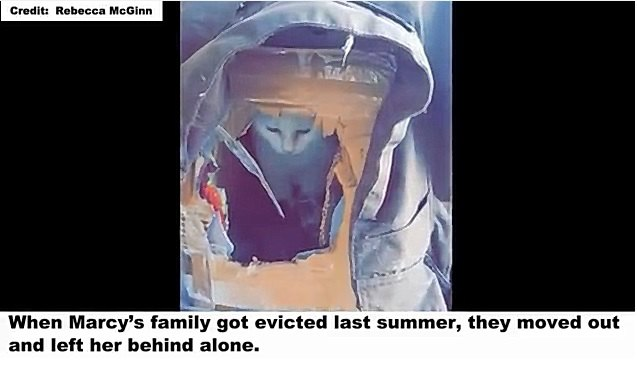 引っ越しで置き去りにされた猫は、それでも愛を見失わなかった