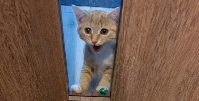 悲しい顔しないで!生後3ヵ月の子猫さんの視線にやられる!