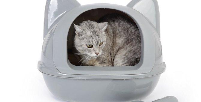 猫が便秘の時には餌を見直そう!フードの選び方やおすすめ商品
