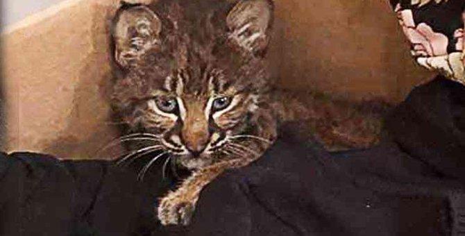 危険な道路でさまよう子猫…保護後に発覚した驚きの事実とは!?