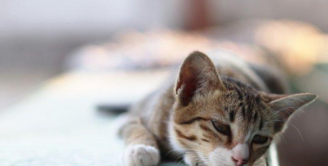 猫が『孤独』を感じてしまう飼い主の行動3つ