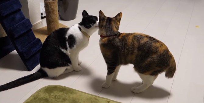 「何がそんなに怖いニャ?」突然の雷!ビビりな猫と全然気にしない猫ちゃんの違いが面白い