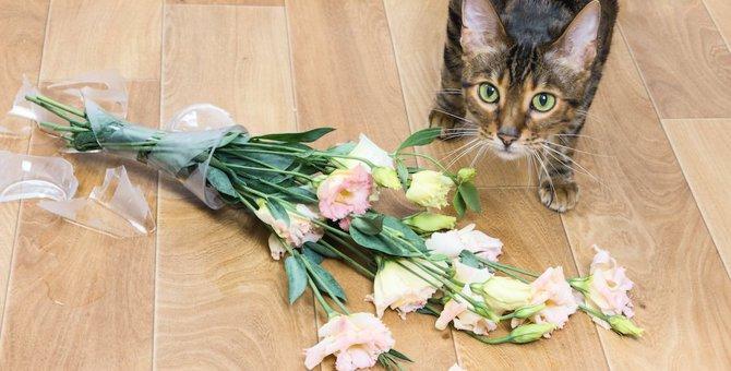猫が家を荒らす原因と対処法5つ