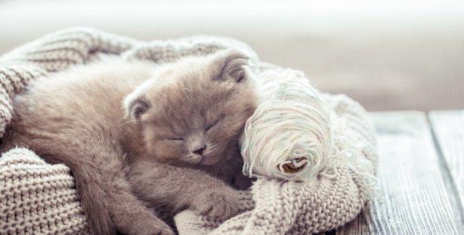 猫はどれぐらいの寒さなら耐えられる?お部屋の寒さ対策