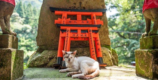 猫を祀った神社!ご利益もたくさん