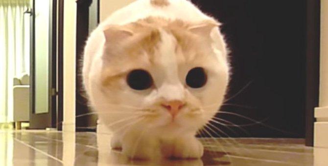 忍び足でじわじわ近づく猫さん!