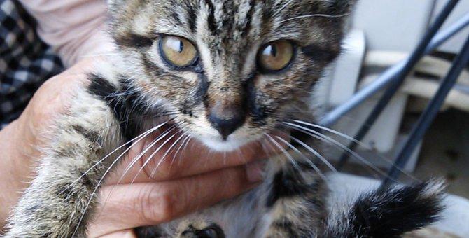猫と暮らすということ~命を預かる責任と覚悟~