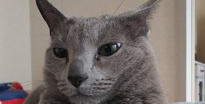『悩み事なら聞くよ?』腕を組む猫さんがイケニャン過ぎると話題♡
