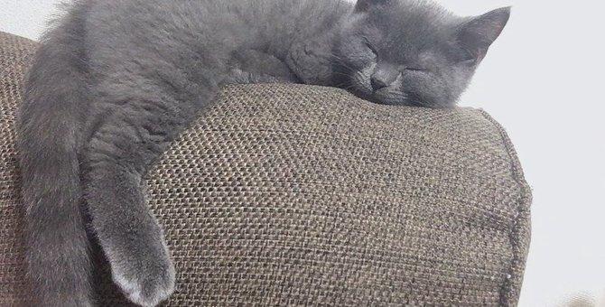 『眠っている猫が喉を鳴らす』ときの気持ち3つ