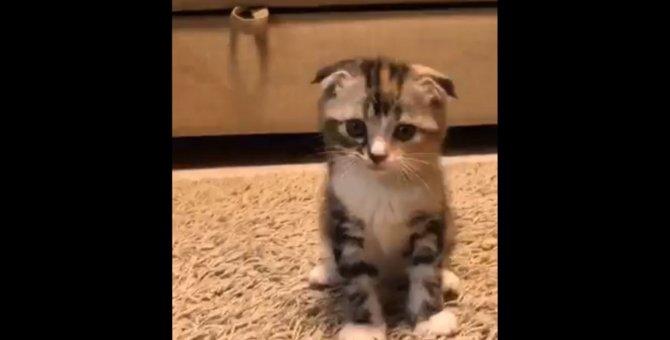 【キュン死注意】子猫の初めての猫パンチにツイッター民悶絶♡