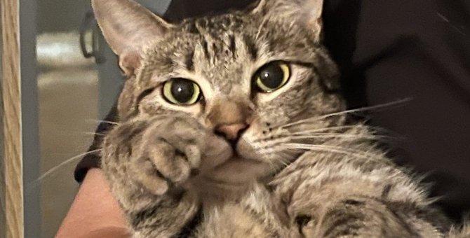 猫との絆が強まる『話しかけ』のコツ5つ